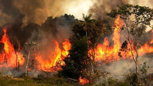 آتش سوزی در اطراف دریاچه خلیج فارس+فیلم