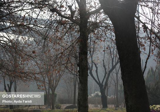 آلودگی (15)