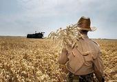 مشکل اصلی گندمکاران چیست؟