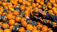 هزاران تن میوه در آستانه فساد! / مقصر کیست؟