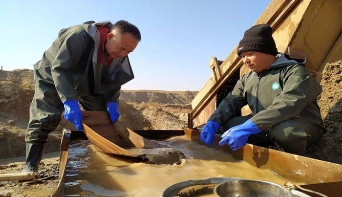 خیز بلند چینی ها برای طلای ایران