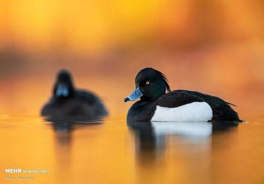 عکاسی-پرنده (3)