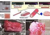 واکسن های آلوده مدرنا ۲ ژاپنی را کشت!