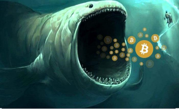 نهنگ ارز دیجیتال چیست؟
