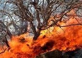آتشسوزی در جنگل یک شهر را تخلیه کرد