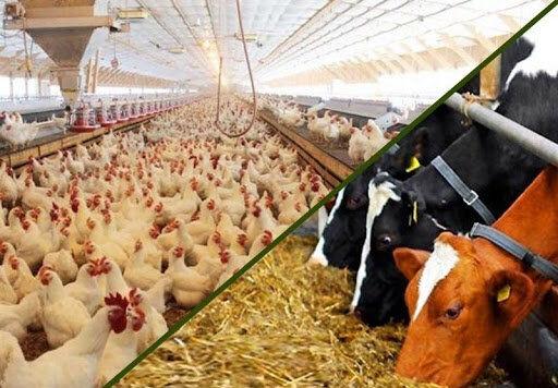 قیمت روز نهاده های دامی و کشاورزی در بازار (۱۴۰۰/۰۱/۲۲) + جدول