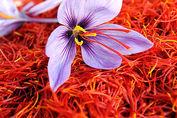 دلالان برنده اصلی بازار زعفران
