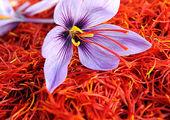 چرا دولت بازار زعفران را ساماندهی نمی کند؟! + فیلم