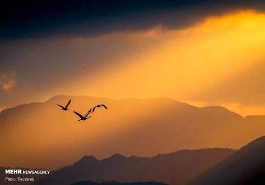 عکاسی-پرنده (18)