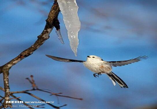 عکاسی-پرنده (22)