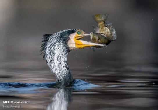 عکاسی-پرنده (16)