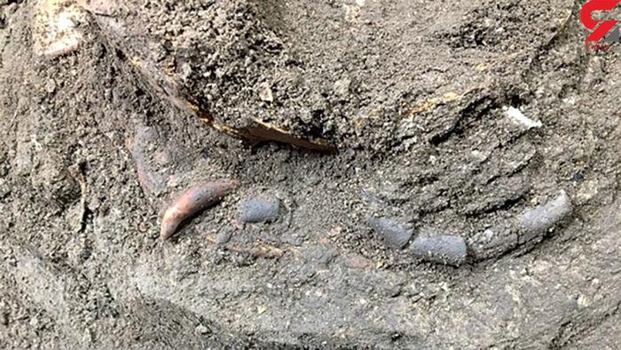 کشف اسکلت ۱۲ هزار ساله در  مازندران / عکس