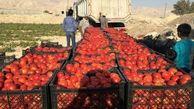 قیمت عجیب ۲ عدد گوجه در بازار