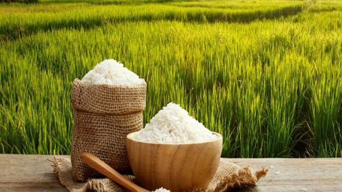معیشت برنج کاران در خطر است