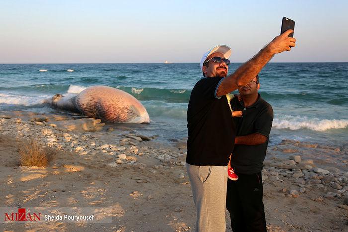 تصاویر/ سلفی با لاشه نهنگ ۵ تنی