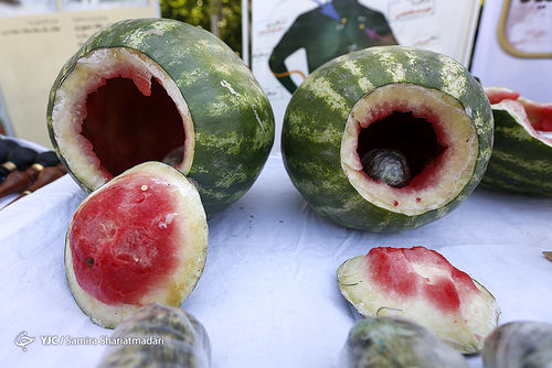 کشف و توقیف هندوانه های افیونی