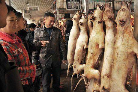 نمایشگاه گوشت سگ در چین افتتاح شد