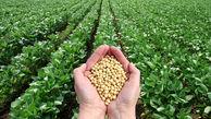 افزایش قیمت سویا در بازارهای جهانی