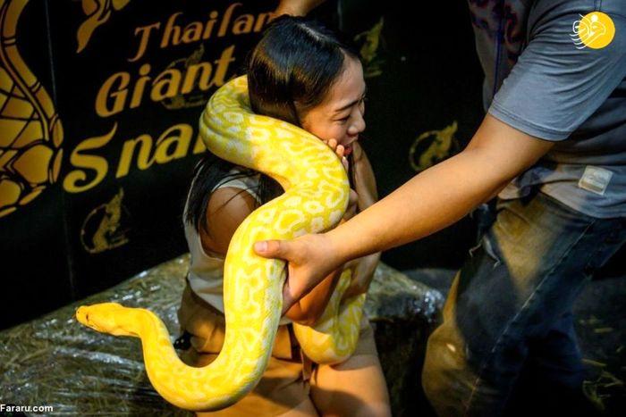 تصاویر / نمایشگاه حیوانات خانگی در بانکوک