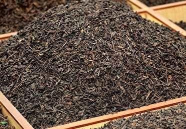 ماجرای ممنوعیت واردات چای