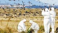 کشف نخستین مورد انتقال آنفلوآنزای مرغی به انسان در جهان