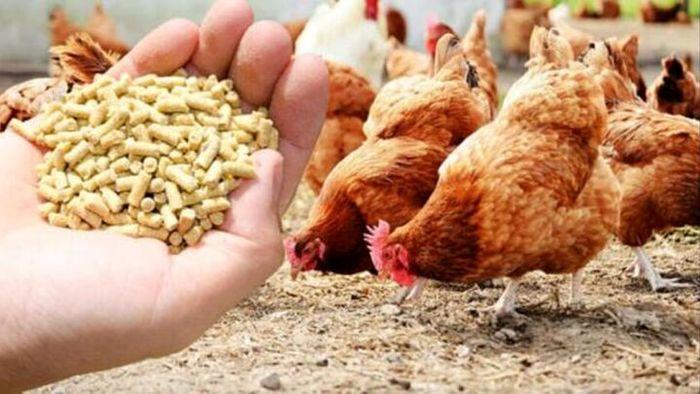 قیمت نهاده های دامی و کشاورزی در بازار (۹۹/۱۲/۸)