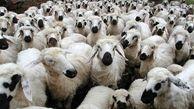 ۳۷۰ کشتارگاه دام در عید قربان فعال هستند