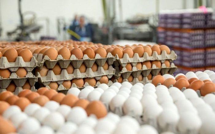قیمت روز تخم مرغ در بازار (۹۹/۱۰/۲۴) + جدول