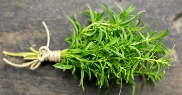این گیاه ضد میکروب است!