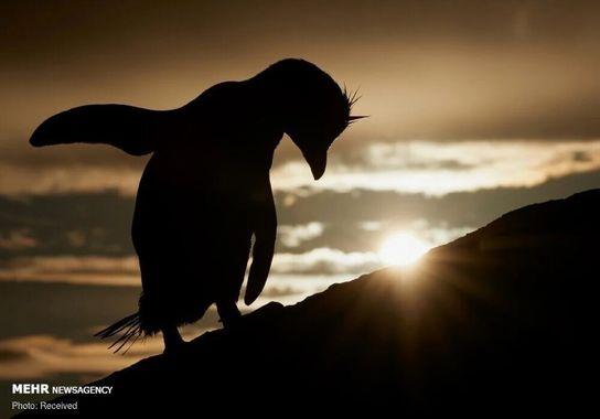 دو عکس راه یافته به فینال مسابقه عکاسی از پرندگان سال ۲۰۲۱