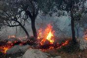 کلاهبرداری با عنوان جمعآوری کمکهای نقدی برای احیای جنگل خائیز