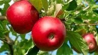 این میوه سلامتی شما را بیمه می کند