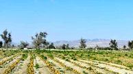 رکوردزنی صادرات محصولات کشاورزی