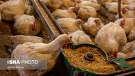 گرانی دوباره قیمت مرغ